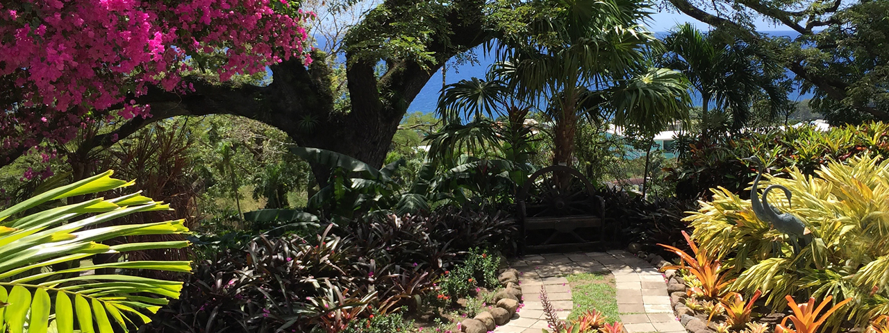 Arts & Gardens of the Caribbean: Round-trip Barbados Aboard Sea Cloud